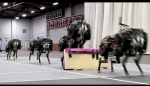 Embedded thumbnail for MIT cheetah robot lands the running jump